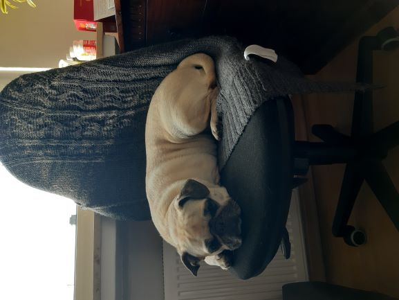 Molly.chillt.auf.Stuhl.jpg
