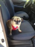 Trixie Auto fahren.jpg